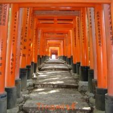 noch ein Torii-Tunnel