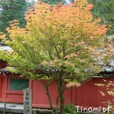 Beginn der Herbstfärbung